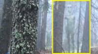 Alien photographed in Bulgaria wilderness
