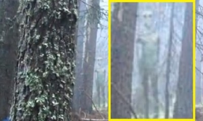 Alien photographed in Bulgaria wilderness