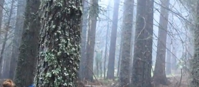 Alien spotted in Bulgarian wilderness