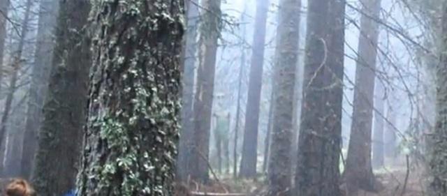 Alien spotted in Bulgarian wilderness