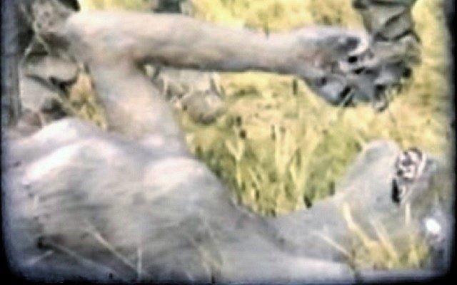German soliders discover female werewolf in field