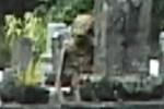Alien in graveyard