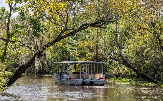 Manchac swamp tour Julia Brown