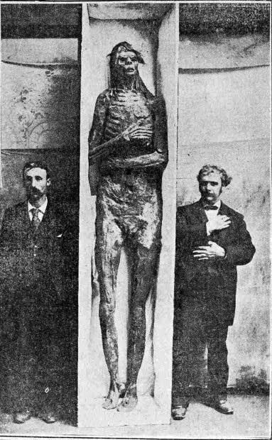 The San Diego giant