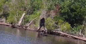 Sasquatch in Albemarle county Virginia