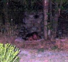 Strange demon photographed in the dark