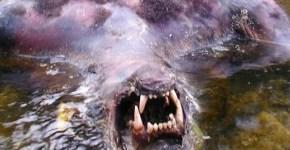 Werewolf in the water