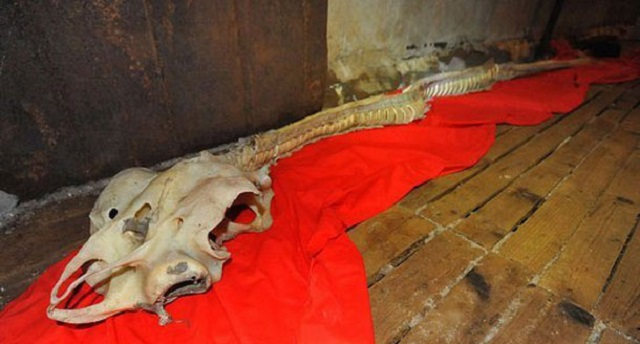 Dragon skeleton found in China