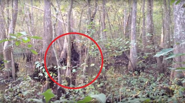 Josh Highcliff Bigfoot sighting standing