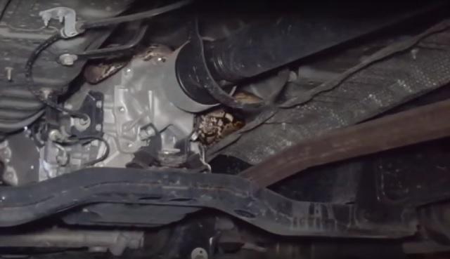 Python snake under truck