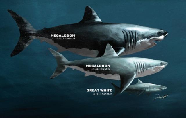Image: Sharkopedia Discovery Megalodon