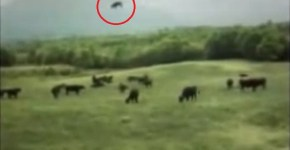 UFO cow abduction video
