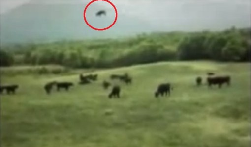UFO cow abduction video