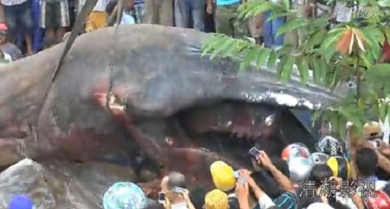 Giant-sized sea monster discovered in Cambodia