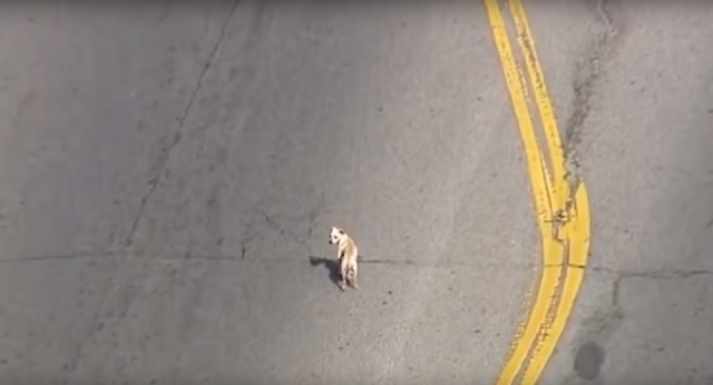 Alien pod falls from LA police officers leg dog
