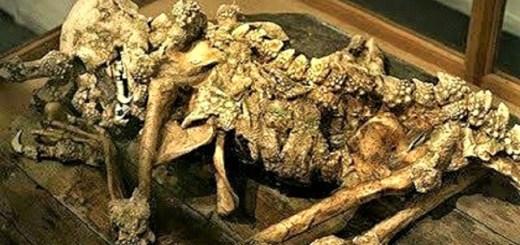 Chinese Shopkeeper Keeps Dragon Man Bones