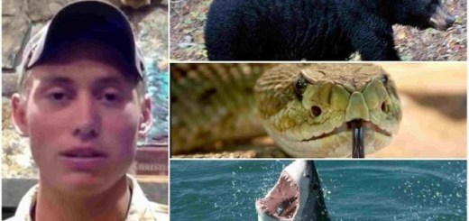 Unlucky Guy gets attacked by bear, snake and shark