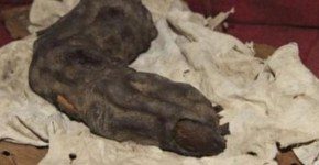 Mummified Foot Long Finger Found