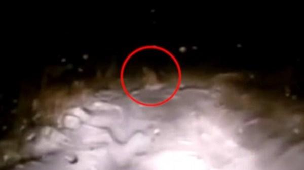 Bigfoot dashcam capture Russia