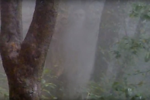 Ghost face in the forest