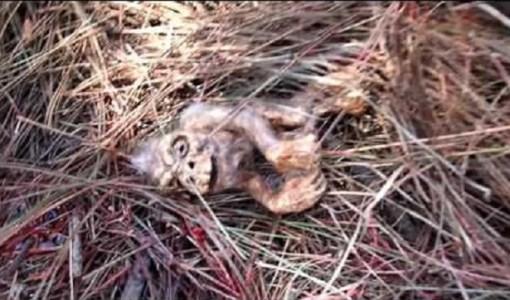 Bigfoot Fetus found in Clints Well Arizona