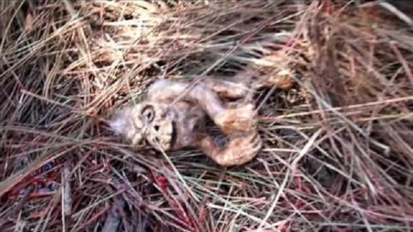Bigfoot Fetus found in Clints Well Arizona