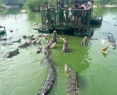 Crocodile Raft Tour shut down Thailand
