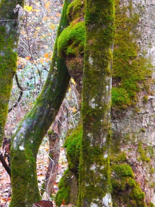 Tree Moss Woman Forest