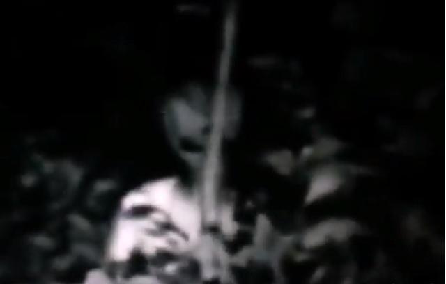 Hidden Alien Found In The Forest