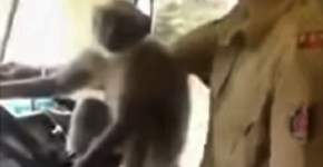 Monkey drives Bus In India