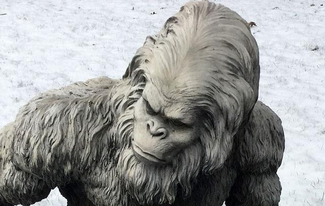 Man shot after being mistaken for Bigfoot