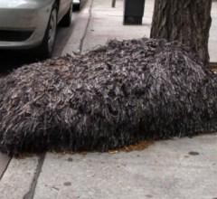 Hairy blob creature on New York City street