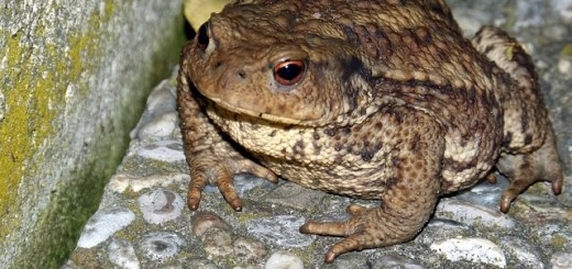 Thousands Of Toxic Toads Take Over Florida Community
