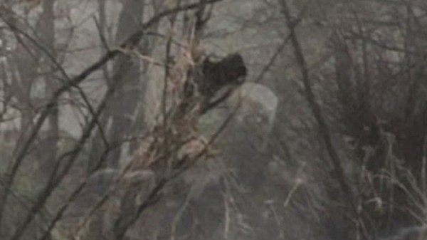 Ghostly Apparition Appears Along Pathway In United Kingdom