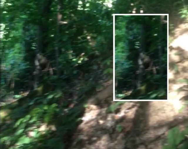 Multi-Dimensional Entity In The Woods Photographed