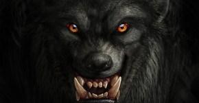 dark-werewolf