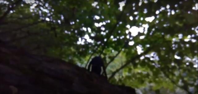 Strange creature filmed in the forest of Dagestan