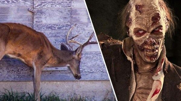 Deer zombie infection