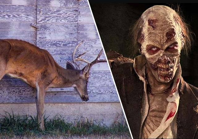 Deer zombie infection