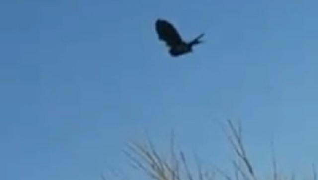 Matrix glitch crow New Mexico Kayleen Bowman