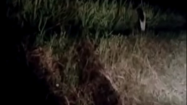 Unknown Video Shows Strange Creature Moving Alongside Road At Night