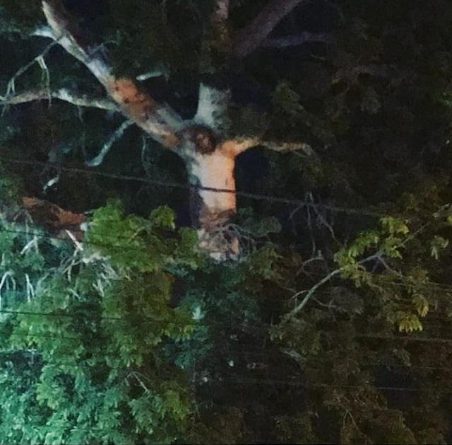 Jesus Tree in Colombia