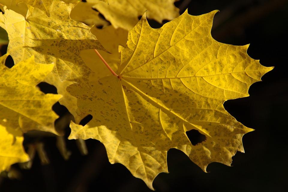 autumn-110668_960_720