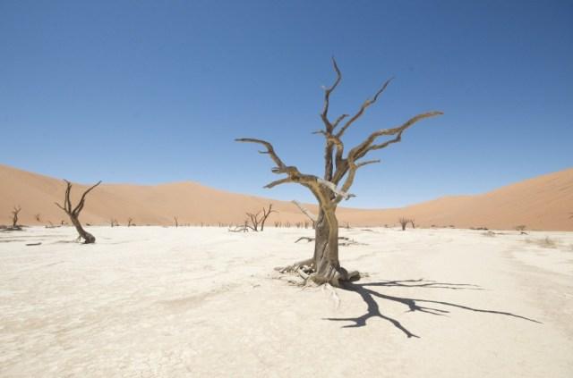 Deadvlei bij Sossusvlei, Namibië