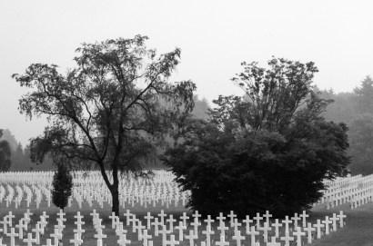 Henri-Chapelle American Cemetery And Memorial bomen