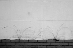 Gras in muur domein hofstade