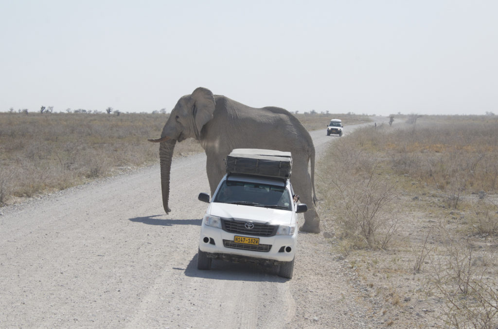 encounter elephants in etosha
