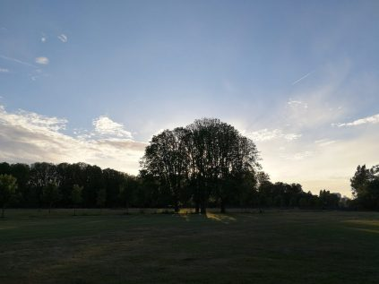 photographing in HDR with Huawei P10 Middelheim