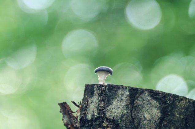 1. Mushroom