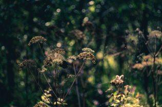9. Lighted plants